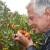 Neodoljiva privlačnost plodova planike: Magunje ukusne i ljekovite, ali i - opasne!