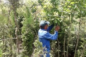 Hitno urediti oblast prometa sjemena i sadnog materijala