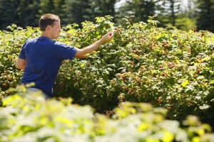 Prednosti integrirane proizvodnje voća
