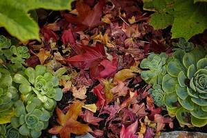 Iskoristite opalo lišće kao malč