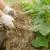Malčiranje je mjera koja čuva kvalitetu zemljišta