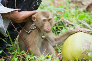 Svi smo mi mali majmuni - na uzici, u štali i među policama