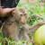 Kao radnu snagu često se zloupotrebljava(lo) djecu, sad i majmune