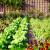 Male površine - koje kulture su najzahvalnije za uzgoj