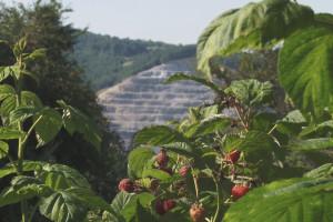 Organska proizvodnja u okolini jezera Stubo Rovni