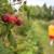 Udruženje otkupljivača i izvoznika jagodičastog voća FBiH: Ograđujemo se od objavljenih cijena, nastavite s berbom malina!