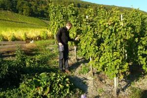 Nitko nema vrstu potpore kao vinogradari i vinari iz Vinske omotnice, iskoristite to!