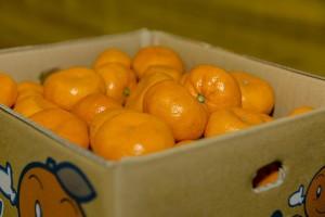 Treći put zabranili uvoz mandarina iz Turske