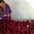 Suve punjene paprike - do pravog ukusa važno pravilno sušenje