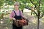Najveći projekt uzgoja marelica u Europi