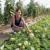 Lubenice na foliji, a uzgoj dinja ananas sličan proizvodnji krastavca
