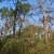 Potkornjak uništava Marjan, idući tjedan kreće sječa
