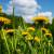 Završena izrada Priručnika za sakupljanje ljekovitog bilja i gljiva