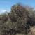 Lopovi ukrali stabla masline na njezin Svjetski dan