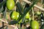 Nedovoljna potrošnja maslinova ulja