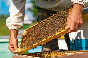 Jusuf Petrović: Pri proizvodnji matica koristim voštane čahure, prirodnije su za pčele