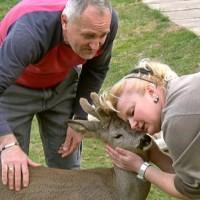 Srndać Bambi ljubimac je obitelji Petrašević i velika atrakcija u selu