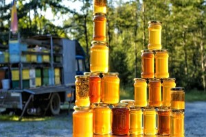 Startap paketi kao podrška mladim pčelarima