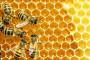 Izvori finansiranja pčelara u Srbiji