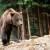 Dramatična borba: Od napada medveda spasili ga njegovi psi