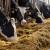 Poljoprivreda emituje 10% štetnih gasova