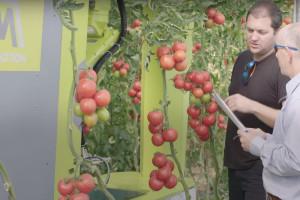 Robot berač rajčice štedi 50% troškova radne snage i prikuplja korisne informacije