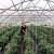 Mevlida Saltagić: Zbog zdravlja sam se okrenula vlastitom uzgoju povrća