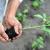 Mikoriza obogaćuje osiromašeno zemljište i pozitivno djeluje na biljke i prinose