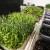 Za zimske dane - najzdravije je mikropovrće
