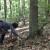Proizvodnja šumskih sortimenata kod nas bilježi pad - otvaranje tržišta kao rješenje?