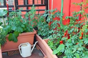 Uzgojite povrće i začinsko bilje na balkonu