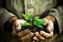 Koje gnojivo odabrati za uspješnu sadnju?
