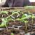 Udvostručena proizvodnja organske hrane na padinama Mojmila