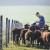 ZPP: Potrebni su resursi za financiranje poljoprivrednika koji se uistinu bave poljoprivredom