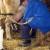 Mljekari skupljaju donacije za respirator: Čašom mlijeka za pluća puna kiseonika