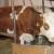 Pomoć za 196 ličkih OPG-ova, s 15 lipa po litri subvencioniran prijevoz otkupljenog mlijeka