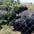 Da li možemo da očuvamo stare rase srpskih svinja?