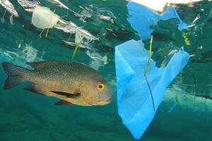 Vreme je za zaštitu mora - odzvonilo štapićima za uši, slamkama i držačima balona