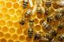 Može li pivo spasiti pčele?