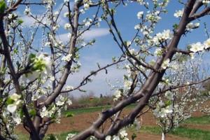 Kako zadimljavanjem zaštititi zasad od proljetnog mraza?