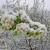 Mraz obrao nasade, na hektar intenzivnog voćnjaka neće biti šljiva ni za pekmez