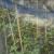 Mreža za zasjenjivanje sačuvat će povrće i cvijeće od ožegotina