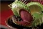 Biljke mesožderke