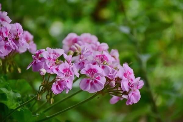Praćenje trendova put ka uspehu u cvećarstvu