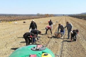 Na imanju Šime Škaulja podignut jedinstveni vinograd, plod suradnje s Portugalom