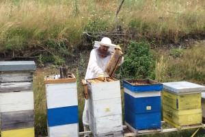 Iskusni pčelar i njegov komšija preživjeli ubode preko 300 pčela