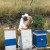 Iskusni pčelar i njegov komšija preživeli ubode 300 pčela