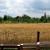 Kako uzgajati pšenicu u ekološkoj proizvodnji