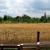 Kako uzgajati pšenicu u organskoj proizvodnji