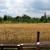 Kakva je tehnologija gajenja pšenice u organskoj proizvodnji?